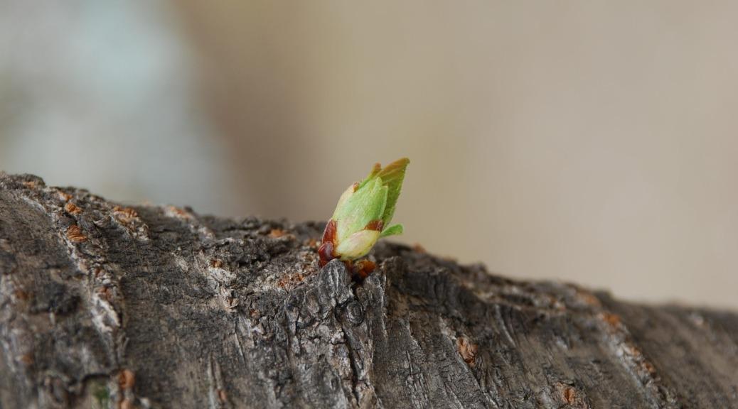 a bud of hope